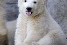 cute animals | animais | 動物 (どうぶつ) / animais