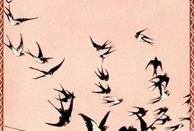 Rondini e uccelli