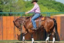 Equine / rider training
