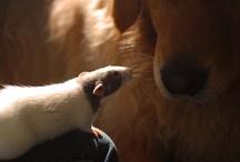 Dog and ........ / www.poochandcompany.co.uk