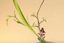 Ikebana, Kokedama & Bonsai / by Katrin Boeke-Purkis