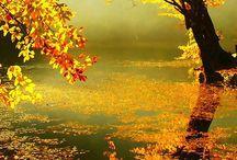Natureza e Paisagem / céu, sol, plantas, pássaros, tudo vive, voa e é livre como bosques e florestas