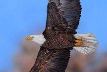 Αετός 3
