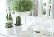 Plants & Green / Plants