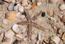 ## Travel Tips: Shell Collecting ## / OK we admit it: we looooove collecting shells and pictures of shells!
