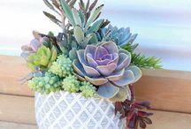 Plants n Succulents