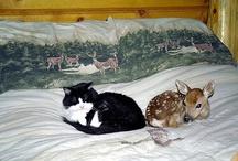 Deer Me &  Friends / by Sandy Bobbitt