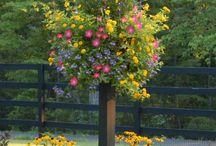 rozkvetlé závěsné květináče