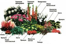 клумбы цветники