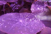 I Love Purple / by Kristin Hudson
