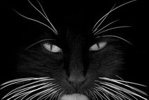 Black & white / by Ilona Oerlemans