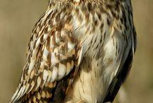 ♡ Owls ♡