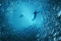 under water / by Richie Anaya