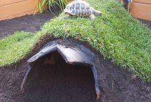 Tortoise & ideas