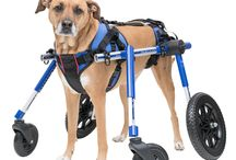 Handicapped Dog Accessories / Handicapped Dog Accessories Products for Handicapped & Disabled Pets Supplies - Dog Wheelchair & much more