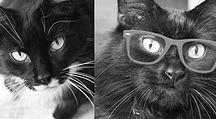 Kurator Kats - Coolest Kitties