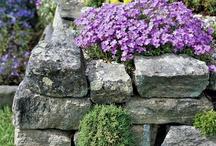 Záhrada - skalka