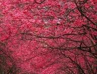 Nature - beautiful!