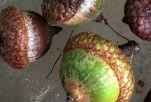vruchtjes besjes zaadjes