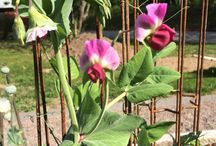 My garden / Garden, flowers, trädgård, blommor