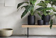 Planten kantoor