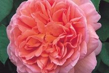 Garden Wishes + Wants / by Nicky Bonomo