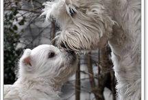 Eläimet sekä lemmikit