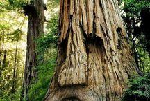 árboles geniales