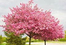 Best Trees for Backyards