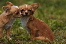 The Cuteness of Dogs