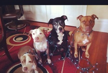 My grand pits / by Marilyn Ledesma