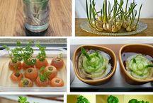 growing own vegtables
