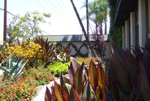 Xeriscaping   New Braunfels Homes / #recipes #realestate #hillcountry #newbraunfels #texas #homesforsale #stagingtips #diy #xeriscape #kitchens #livingroom #kitchen #bedroom #bathroom