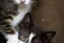 Søte små Katt unger