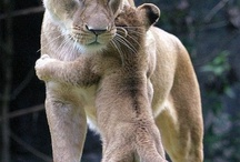 Photography-Animals