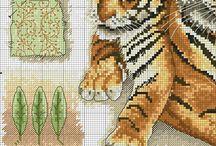 Tiger (India)
