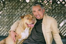 Cesar Millan hund träning