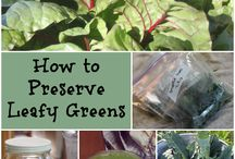 Coping with the glut - Preserving and bottling