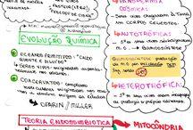 Estudos de Biologia.