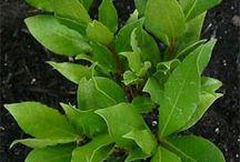 In The Garden...Herbs