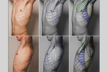 Anatomia - Costela