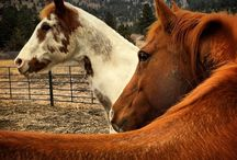 Equine Therapy / Photos to give you a sense of the equine therapy program.