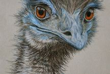 Art - Birds - Emus