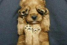 lovely dogs ;)