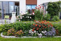 puutarhan kukat/flowers