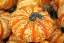 Autumn. / L'autunno e la sua magica atmosfera...