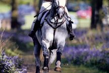 horses / beautiful creatures