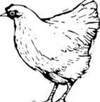 Chickie Doodles / by Deborah Powers