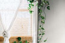 Bepflanzungsideen in der Wohnung