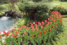garden & house ,moje realizacje . / Projekty i pomysły zrealizowane.